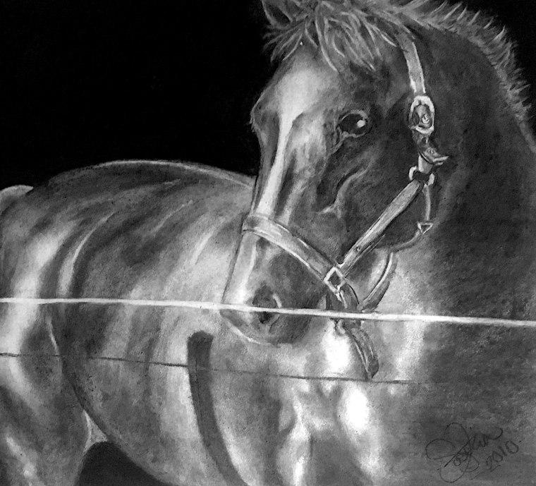 häst - 2010